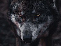 Sight-Seeing: Beware of wolves - no matter what they're wearing