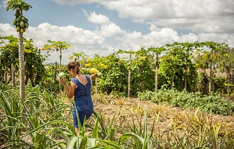 Planning for dry times: Women plant 'water farms' to fight drying soil in north-east Brazil