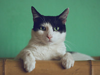 StrangeSights: South Korean broadcaster apologises for stereotypes in Olympic Opening Ceremony coverage; an app to show your cat's pain; and, the world's oldest tennis player...