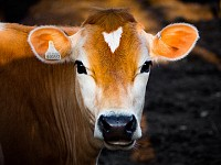 STRANGESIGHTS: 'TUDDER' HELPING BOVINES CONNECT; FLUFFY SURVIVES THE BIG FREEZE; AND A HAND-WASHING SCANDAL...