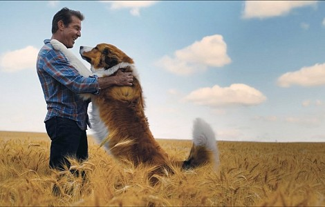 FILM: 'A DOG'S JOURNEY' BRINGS W BRUCE CAMERON'S BAILEY BACK TO LIFE - AND BACK AGAIN