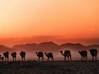 Snapshot: Camels in northern Ethiopia...