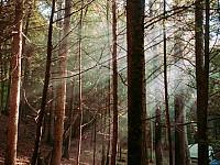 SNAPSHOT: FOREST