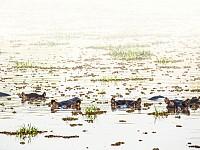 Snapshot: Watching from the water, Zambia...