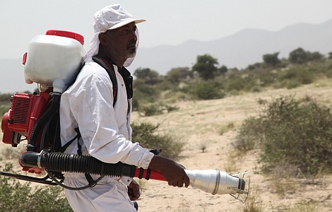 LOCUSTS STEALING LIVES: SOMALILAND FARMERS, HERDERS FEAR LOOMING PLAGUE