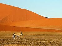SNAPSHOT: NAMIB-NAUKLUFT NATIONAL PARK, NAMIBIA