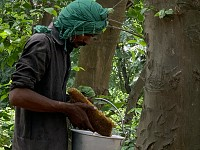 Wow!: Pakistan's tree-planting push has a sweetener - more honey