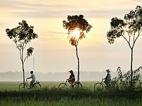 SNAPSHOT: RICE FIELDS, INDONESIA