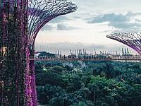 SNAPSHOT: SUPERTREE GROVE, SINGAPORE