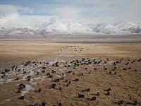 Snapshot: Grazing lands, Tibet
