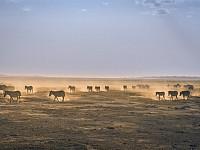 SNAPSHOT: AMBOSELI NATIONAL PARK, KENYA